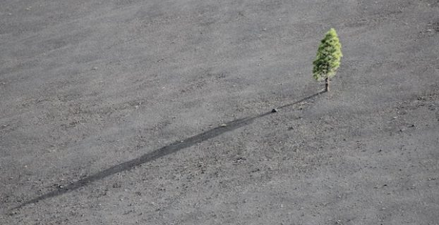 Lone Tree on Hill - Value of Persistence