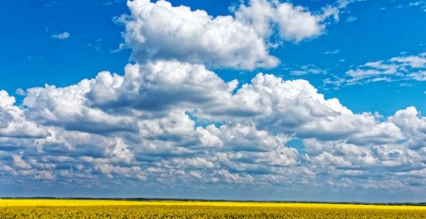 clouds above cotton field filled with flowers - 5 Lessons of Self Employment that Nobody Tells You