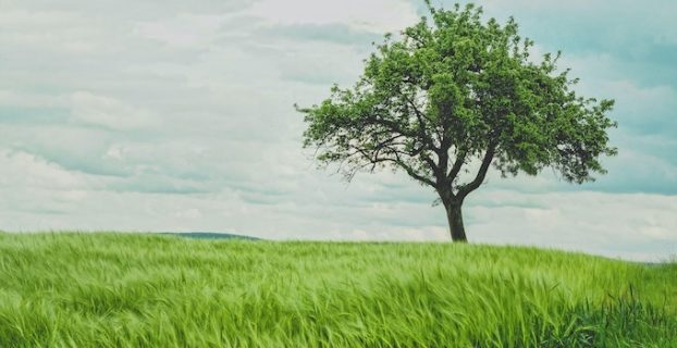 Tree in a field of grass - Evergreen Content Definition - 8 Types and example posts
